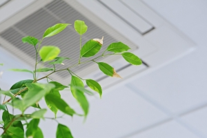 how to improve air quality in home